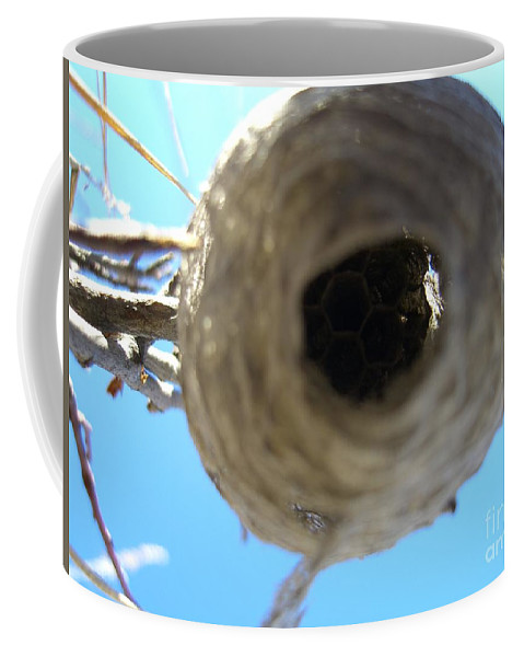 Photograph Bee Hive Blue Sky Branch Insect Coffee Mug featuring the photograph Bee Hive by Seon-Jeong Kim