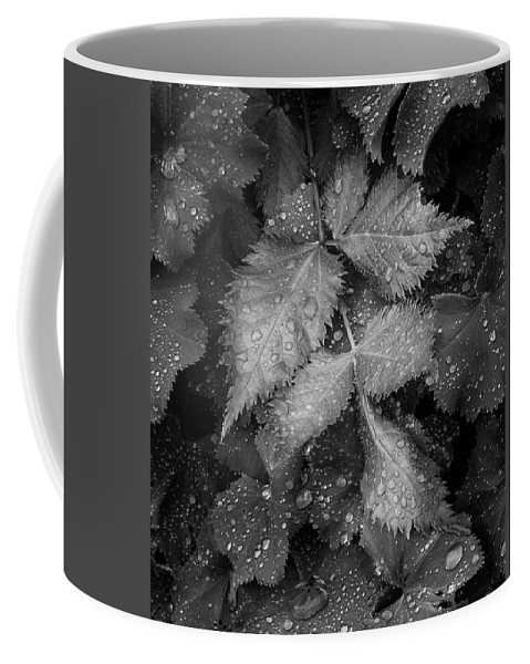 Leaves Coffee Mug featuring the photograph Bellevue Botanical Garden Leaves 6395 by Bob Neiman
