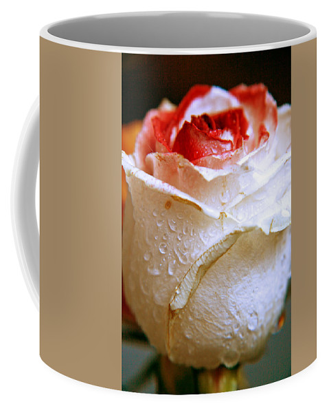 Rose Coffee Mug featuring the photograph Bicolor Rose by Lali Kacharava