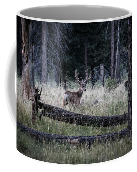 Deer Coffee Mug featuring the photograph Big Buck by Ronald Grogan