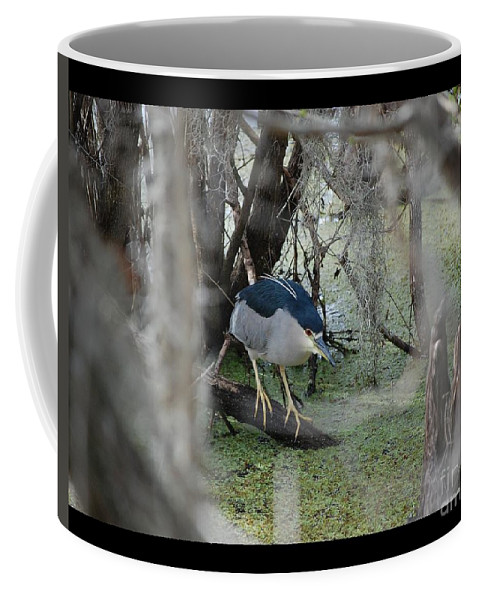 Heron Coffee Mug featuring the photograph Black Crowned Night Heron by Robert Meanor