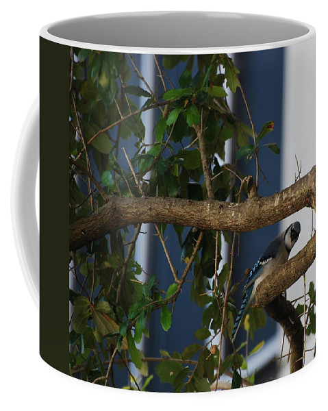 Birds Coffee Mug featuring the photograph Blue Bird by Rob Hans
