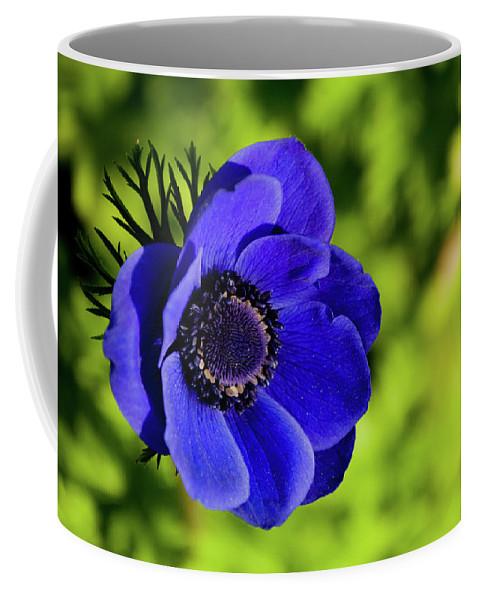Coffee Mug featuring the photograph Blue Bonnet by Trish Tritz
