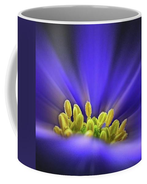 Beautiful Coffee Mug featuring the photograph blue Shades - An Anemone Blanda by John Edwards