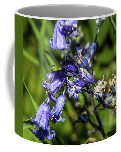 Pretty Flower Pictures Coffee Mug featuring the photograph Bluebells by Ed James