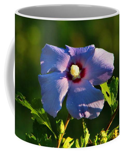 Bluebird Rose Of Sharon Coffee Mug featuring the photograph Bluebird Rose Of Sharon by Kathryn Meyer