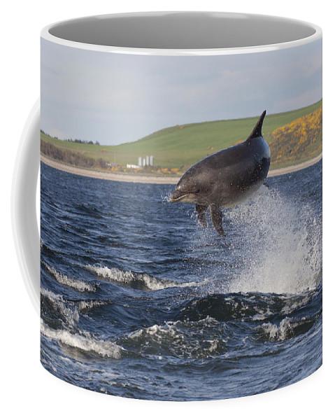 Dolphin Coffee Mug featuring the photograph Bottlenose Dolphin - Scotland #14 by Karen Van Der Zijden