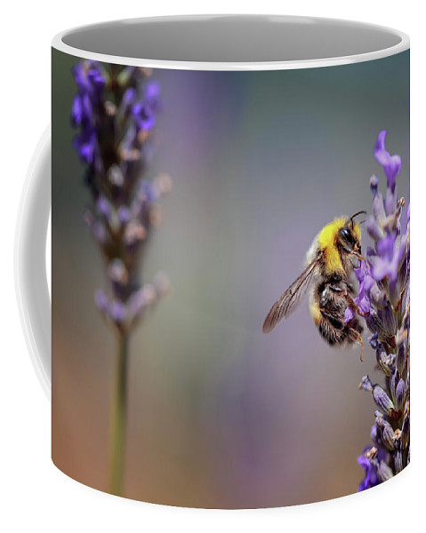 Lavender Coffee Mug featuring the photograph Bumblebee And Lavender by Nailia Schwarz