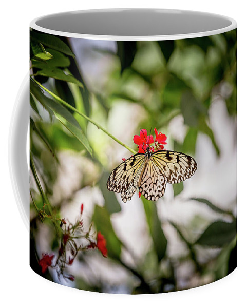 Butterfly Coffee Mug featuring the photograph Paper Kite Butterfly by Jimmy Tran