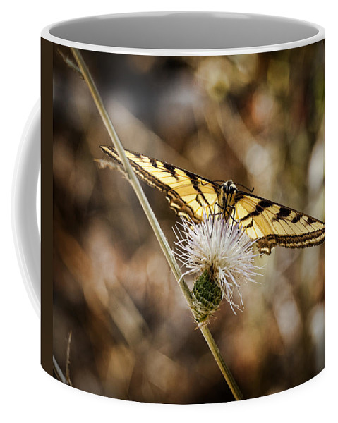 Butterfly Coffee Mug featuring the photograph Swallowtail Butterfly by Kelley King
