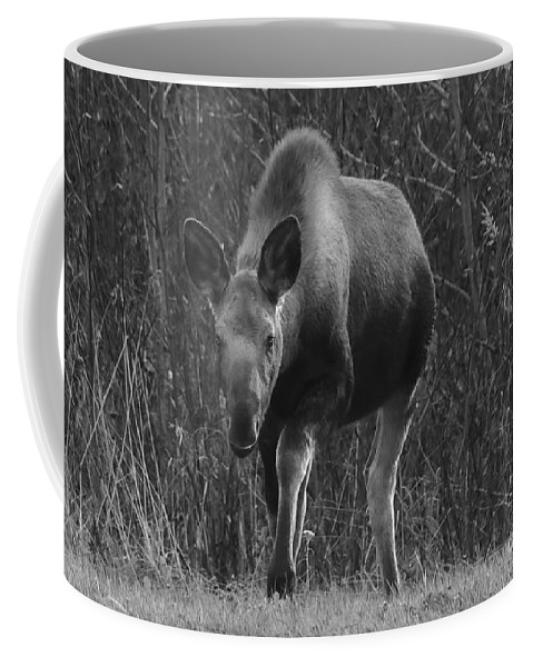 Moose Coffee Mug featuring the photograph Bw Moose by Amber D Hathaway Photography