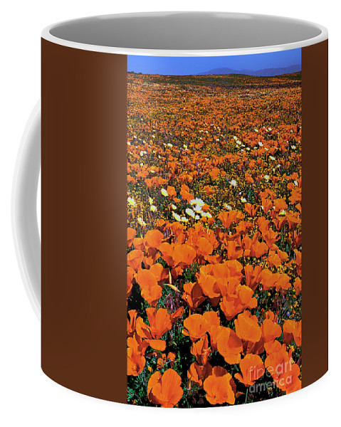 Dave Welling Coffee Mug featuring the photograph California Poppies Desert Dandelions California by Dave Welling