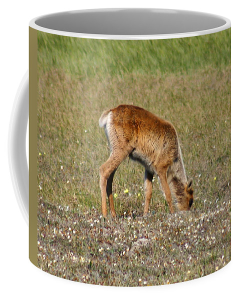 Deer Coffee Mug featuring the photograph Caribou Fawn by Anthony Jones