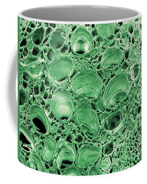 Celery Coffee Mug featuring the photograph Celery Stalk, Sem by Scimat