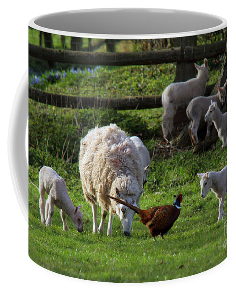 Pheasant Coffee Mug featuring the photograph Close Encounter Of The Third Kind by Angel Ciesniarska