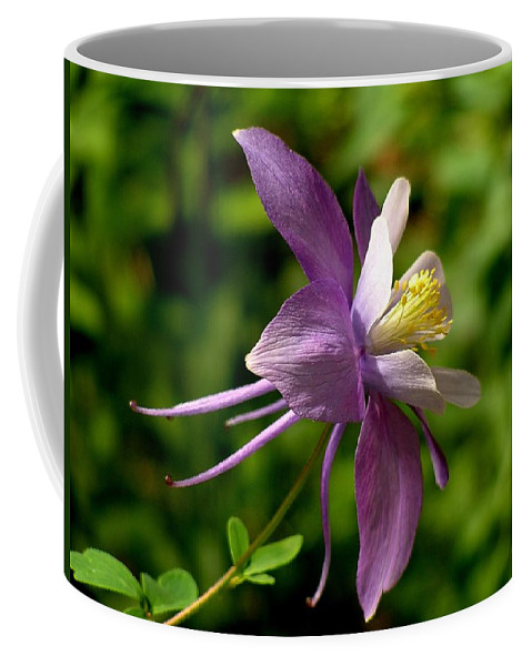 Columbine Coffee Mug featuring the photograph Colorado Columbine by Carol Milisen