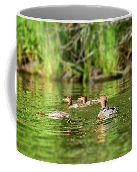 Finland Coffee Mug featuring the photograph Common Merganser by Jouko Lehto