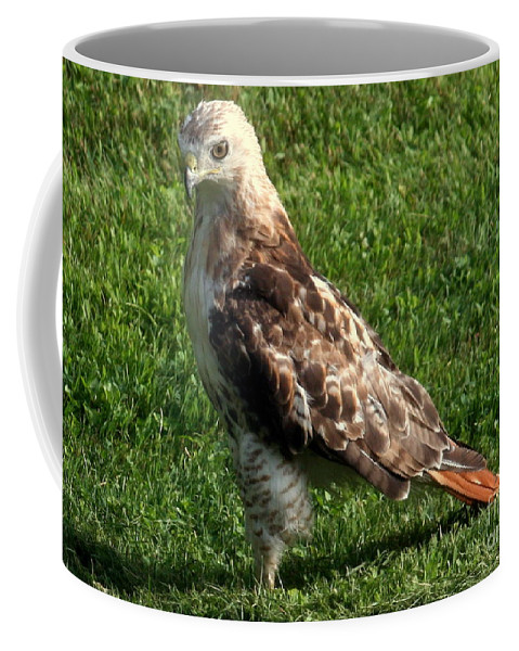 Art Coffee Mug featuring the photograph Concentration by Linda Galok