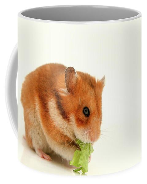 Hamster Coffee Mug featuring the photograph Curious Hamster by Yedidya yos mizrachi