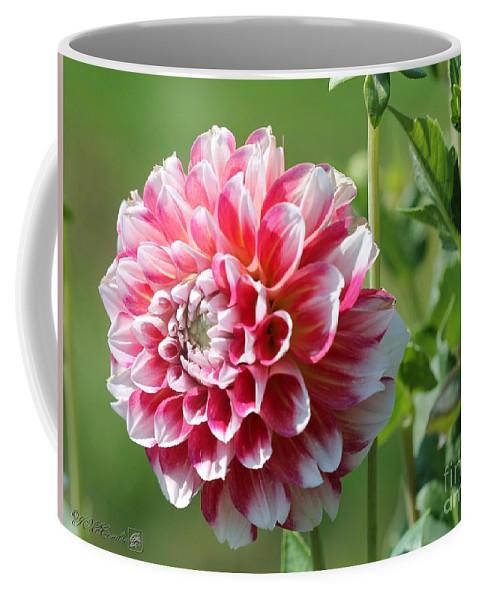 Mccombie Coffee Mug featuring the photograph Dahlia Named Hawaii by J McCombie