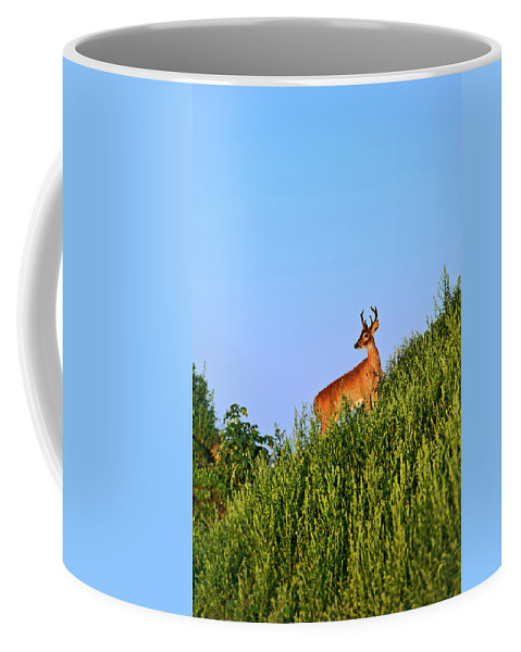 Odocoileus Virginianus Coffee Mug featuring the photograph Deer Buck. by John Greim