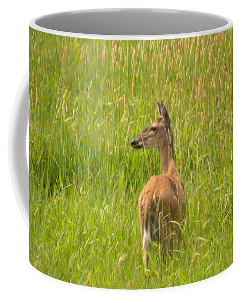 Whitetail Deer Coffee Mug featuring the photograph Deer by Linda Kerkau
