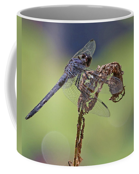 Nature Coffee Mug featuring the photograph Dragonfly by Mike Dickie