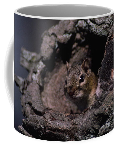 Native Coffee Mug featuring the photograph Eastern Chipmunk In Tree by Mark Wallner