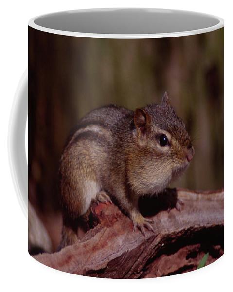 Stump Coffee Mug featuring the photograph Eastern Chipmunk On Stump by Mark Wallner