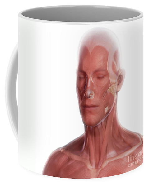 Digitally Generated Image Coffee Mug featuring the photograph Facial Anatomy by Science Picture Co