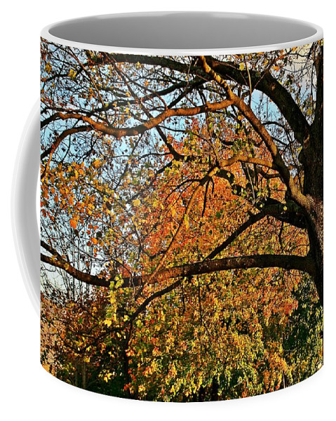 Fall Coffee Mug featuring the photograph Fall Colors by Karl Rose