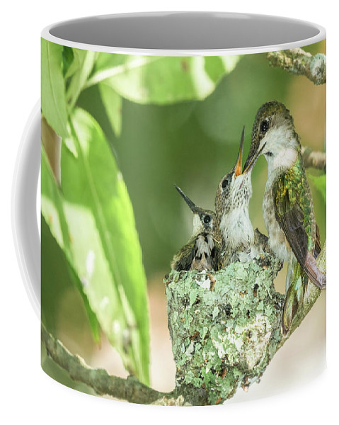 Birds Coffee Mug featuring the photograph Feeding Time by Nancy Marshall