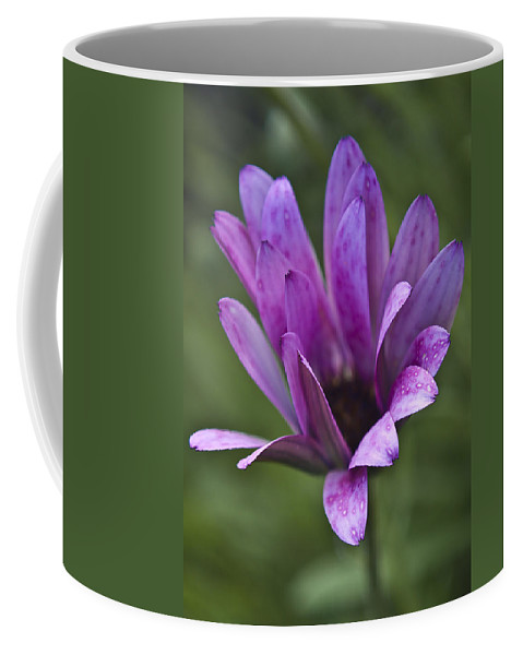 Nature Coffee Mug featuring the photograph Flower by Svetlana Sewell