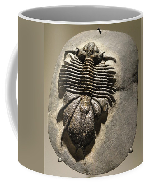 Fossil Coffee Mug featuring the photograph Fossil by FL collection