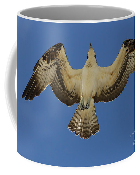 Osprey Coffee Mug featuring the photograph From Below by Deborah Benoit