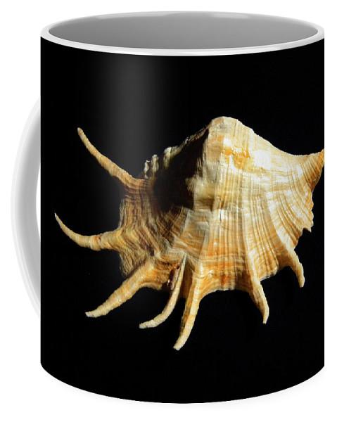 Lambis Truncata Coffee Mug featuring the photograph Giant Spider Conch Seashell Lambis Truncata by Frank Wilson