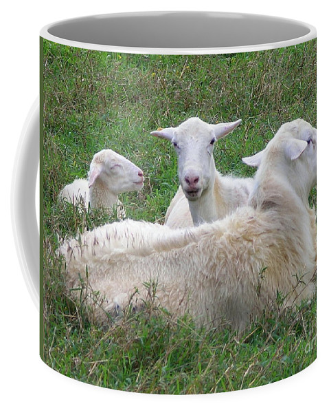 White Animals Coffee Mug featuring the photograph Goat Family by Mary Deal