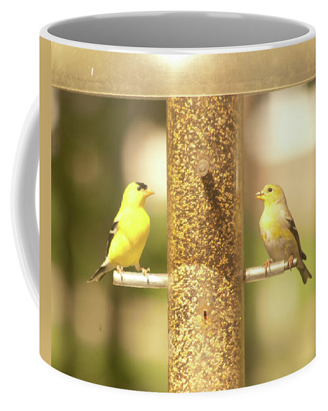 Goldfinch Coffee Mug featuring the photograph Goldfinch by Diane Schuler