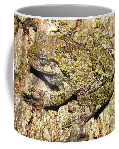 Western Maryland Gray Tree Frog Images Gray Tree Frog Photograph Prints Arborial Amphibian Prints Appalachian Mountain Forest Biodiversity Ecology Biology Nature Images Coffee Mug featuring the photograph Gray Tree Frog by Joshua Bales