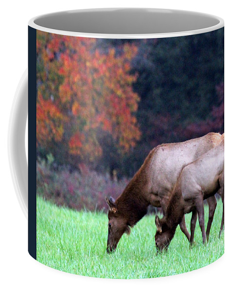 Elk Coffee Mug featuring the photograph Grazing Together by Jennifer Robin