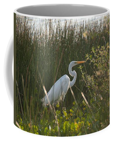 Yucatan Peninsula Coffee Mug featuring the digital art Great Egret At Coba Village by Carol Ailles