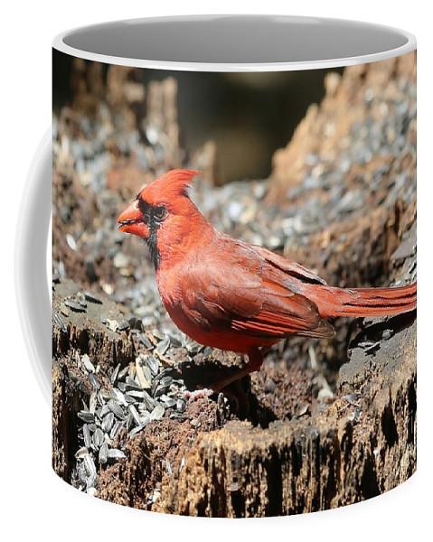 Cardinal Coffee Mug featuring the photograph Hungry Cardinal by Carol Groenen