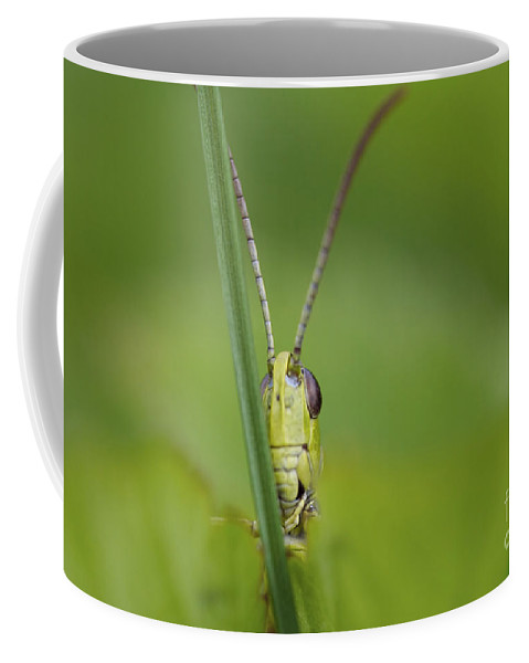 Insect Coffee Mug featuring the photograph Hide And Seek by Michal Boubin