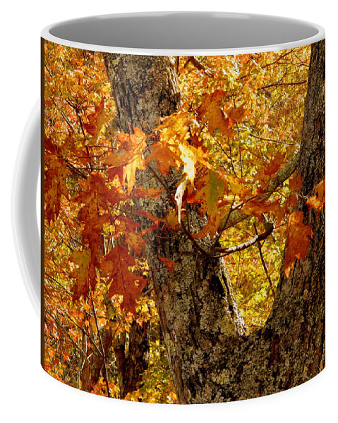 Tree Coffee Mug featuring the photograph Hometown Series - Deep In The Woods by Arlane Crump