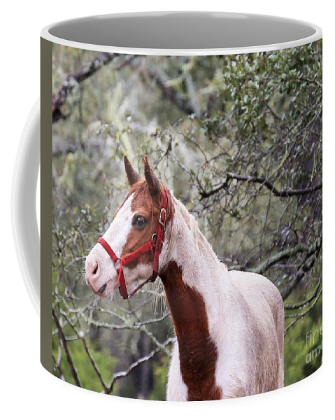 Coffee Mug featuring the photograph Horse 019 by Jeff Downs