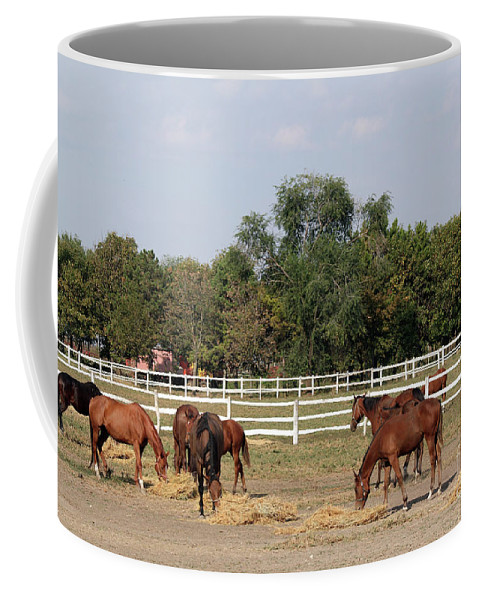 Horse Coffee Mug featuring the photograph Horses Eat Hay On Ranch by Goce Risteski