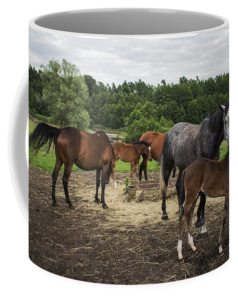 Horse Coffee Mug featuring the photograph Horses by FL collection