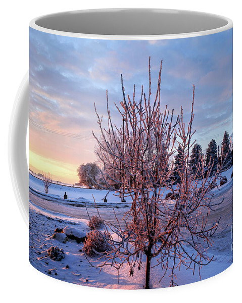 Landscape Coffee Mug featuring the photograph Icy Tree At Sunset by Viktor Birkus