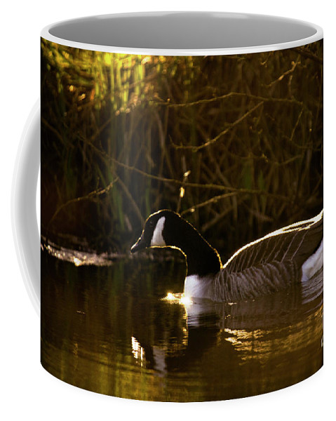 Sunset Coffee Mug featuring the photograph In The Warm Evening Sunlight by Angel Ciesniarska