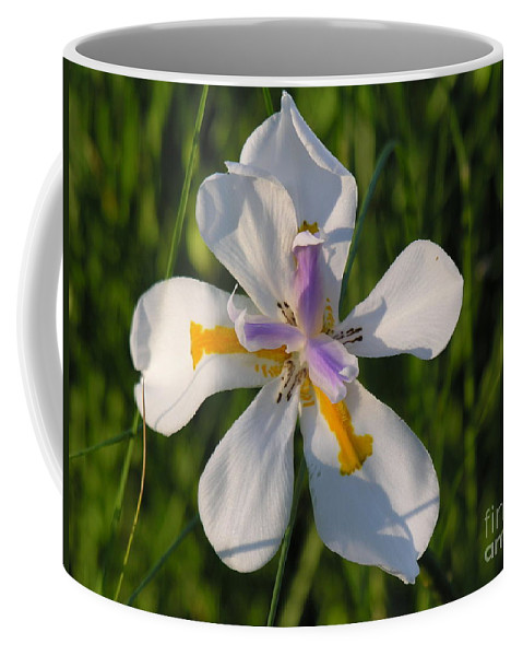 Lilly Coffee Mug featuring the photograph Iris by Diane Greco-Lesser